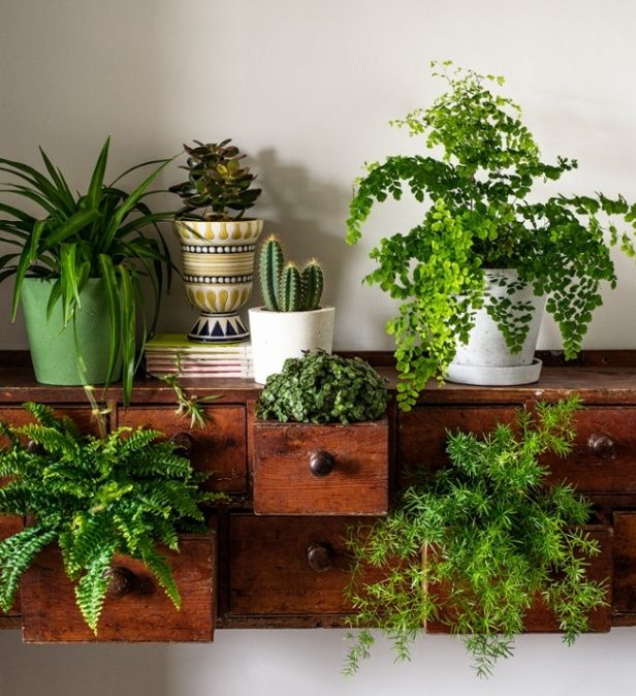 Style house plants by bethany for Indoor greenery ideas